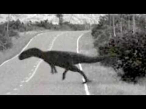 Динозавры снятые на видео, 5 динозавров снятых на камеру