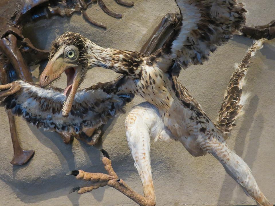 Динозавры птицы, птицы потомки динозавров