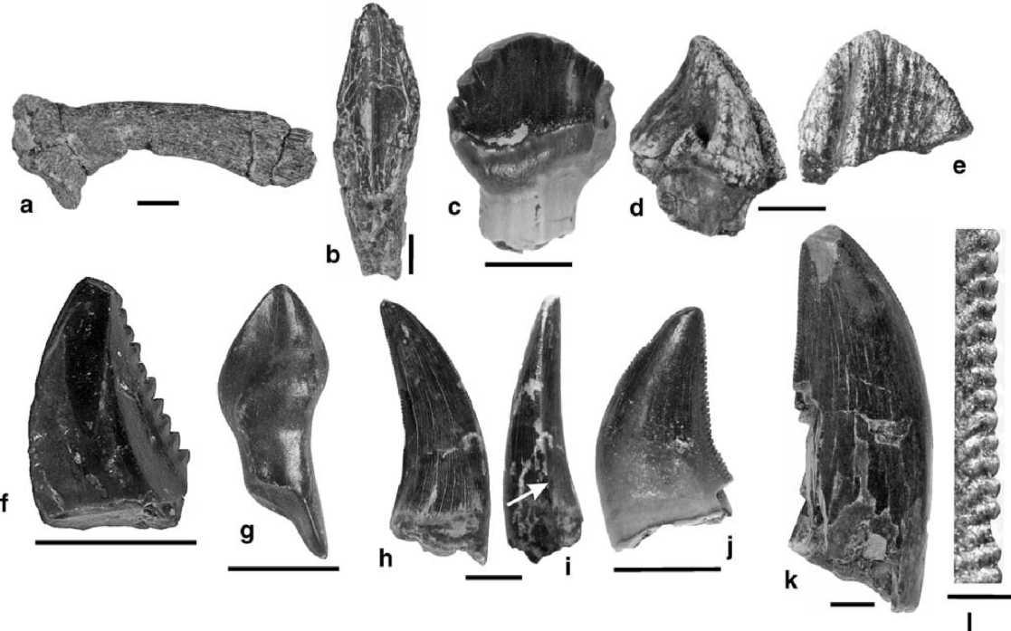 Зуб динозавра, зубы динозавров