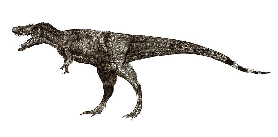 Нанотиранус