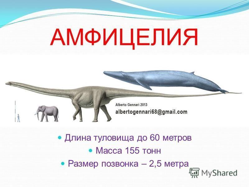 Амфицелия, динозавр амфицелия