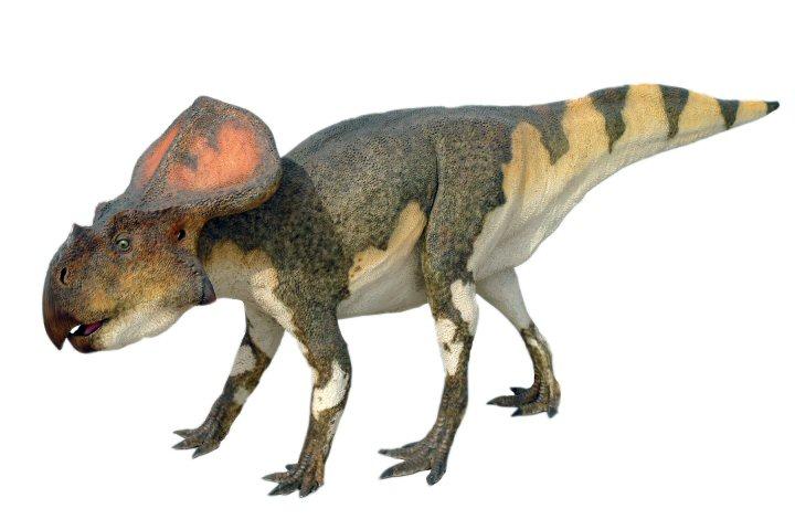 Протоцератопс, протоцератопс фото