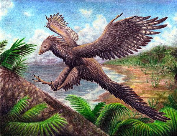Археоптерикс птица, археоптерикс фото
