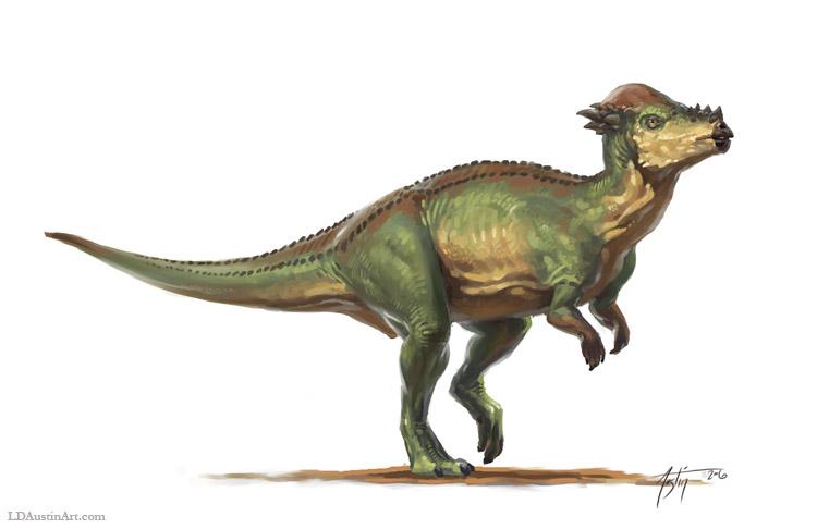 Пахицефалозавр, пахицефалозавр фото