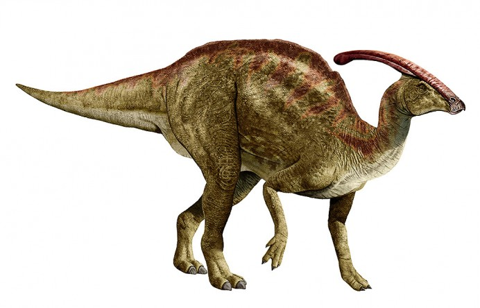 Парасауролоф, паразауролоф фото