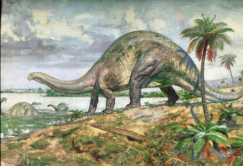 Апатозавр, фото апатозавр