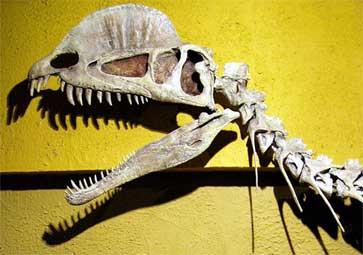 Дилофозавр, дилофозавр фото