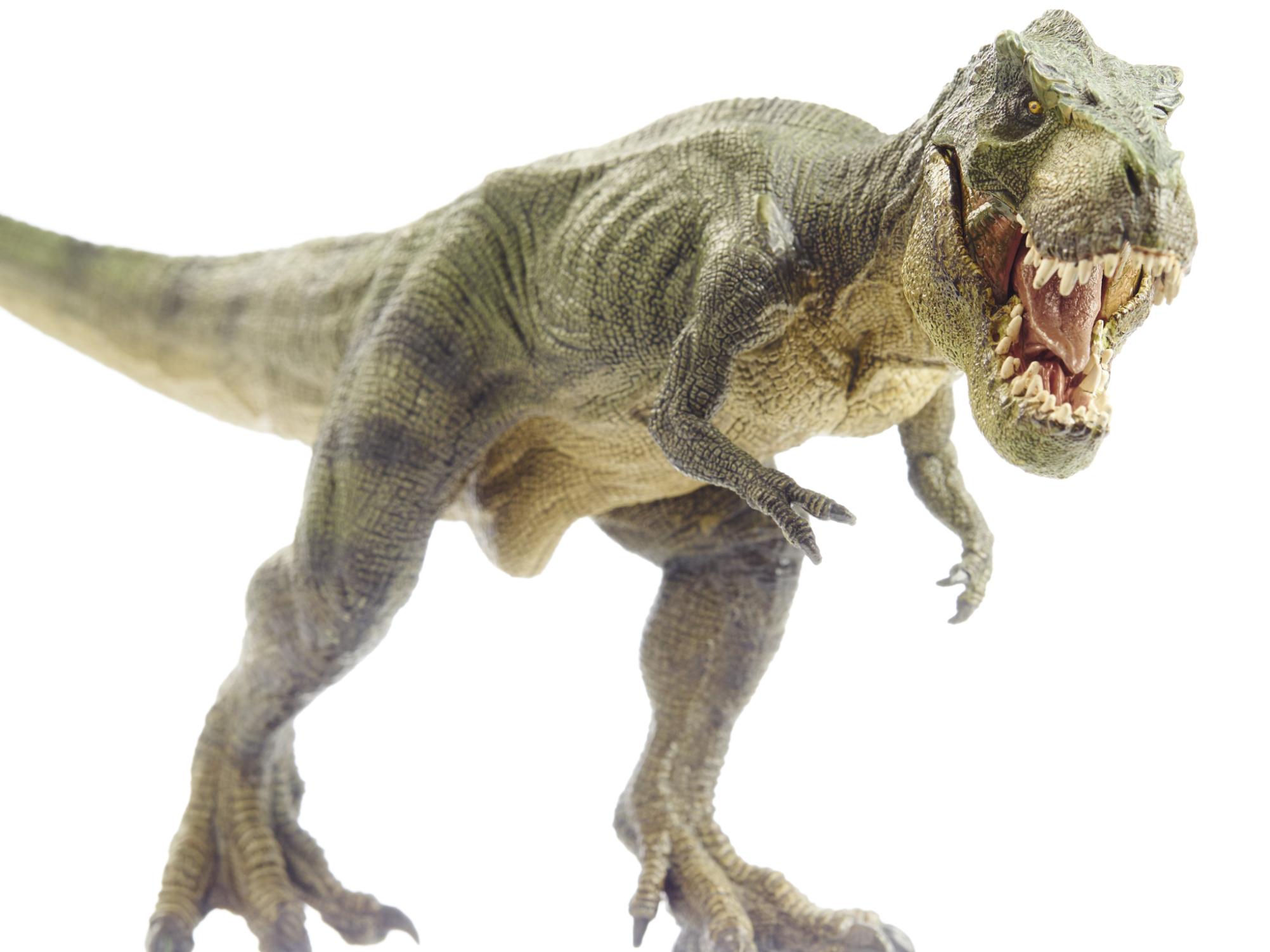 Фото тираннозавр, тиранозавр видео