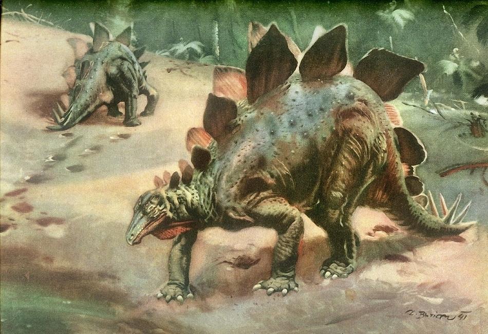Стегозавр, стегозавр фото, картинки стегозавр