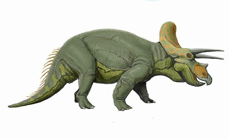 Трицератопс, трицератопс фото