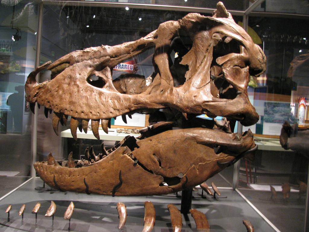 Скелет тираннозавра