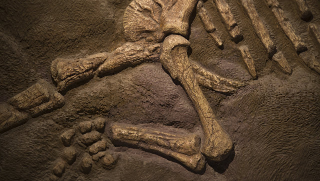 Фото кости динозавров, кости динозавров фото