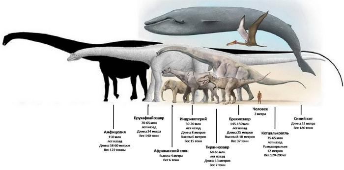 Самые крупные динозавры