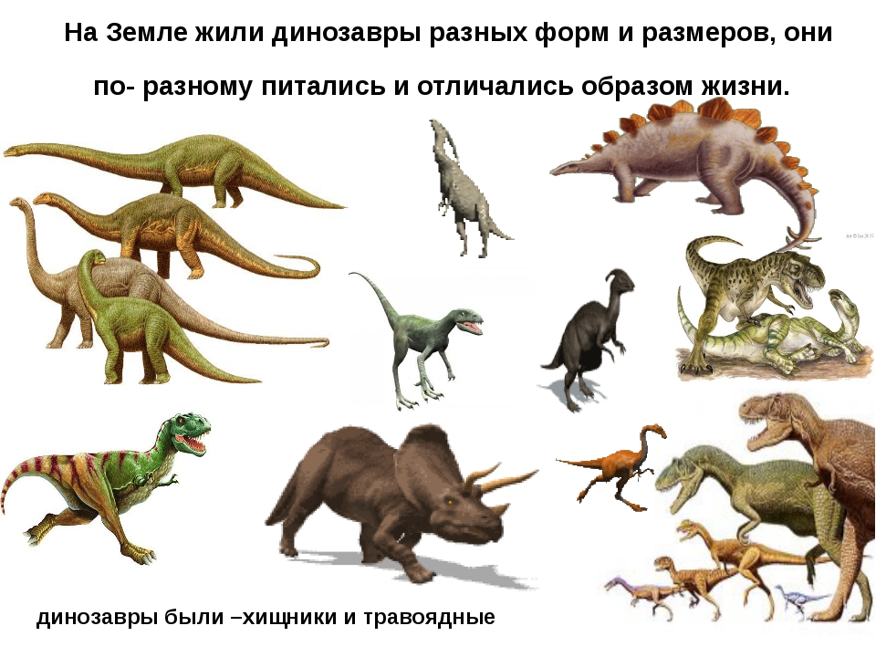 Сколько лет динозавры жили на земле