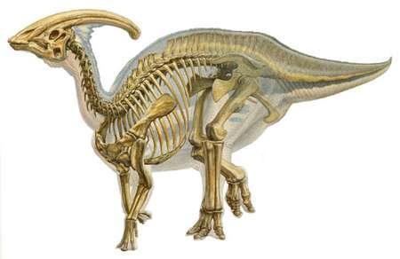 Гадрозавр, гадрозавриды, утконосый динозавр
