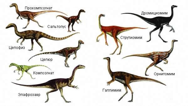 Самые маленькие динозавры