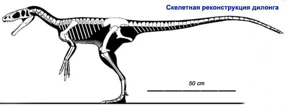 Дилонг, дилонг динозавр