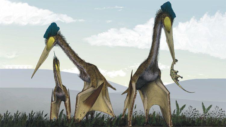 Самый большой летающий динозавр