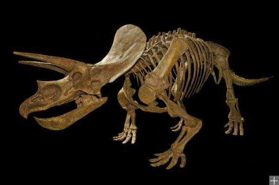 Трехрогий динозавр