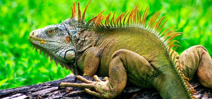 Современный потомок динозавра сканворд