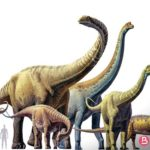 Динозавры с длинной шеей как называются, как называются динозавры с длинной шеей
