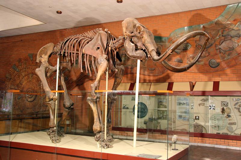 Скелет мамонта, фото скелета мамонта