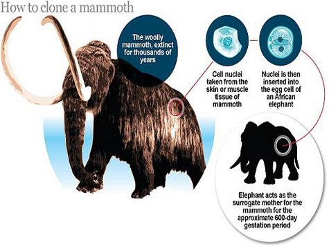 Клонирование мамонта