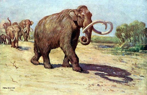 Мамонт колумба, колумбийский мамонт
