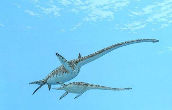 Эласмозавр, эласмозавр фото