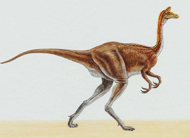 Пелеканимим динозавр