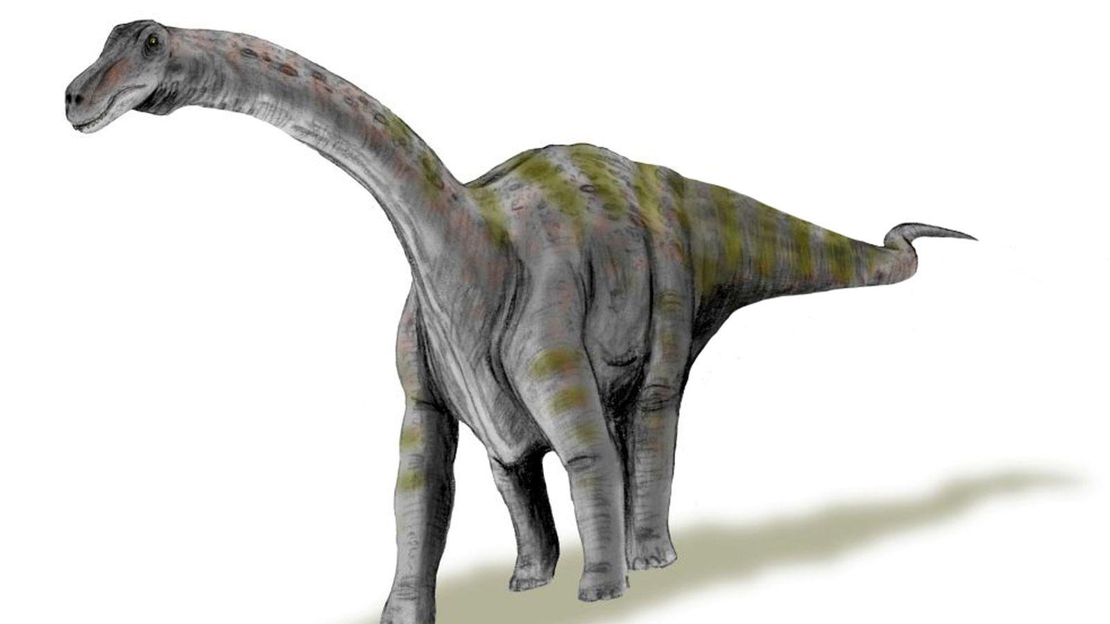 Рапетозавр фото