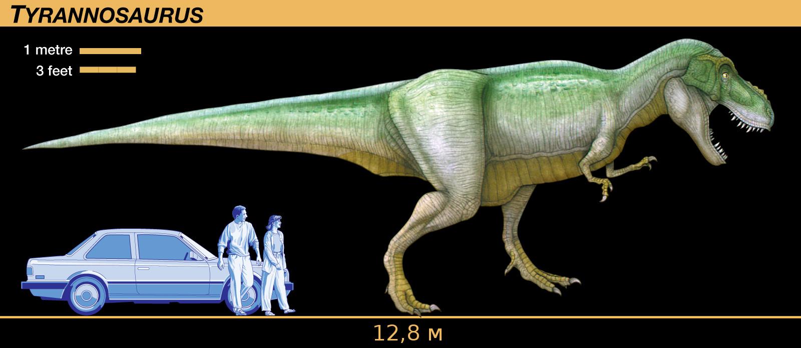 Чем питался тираннозавр, тираннозавр высота