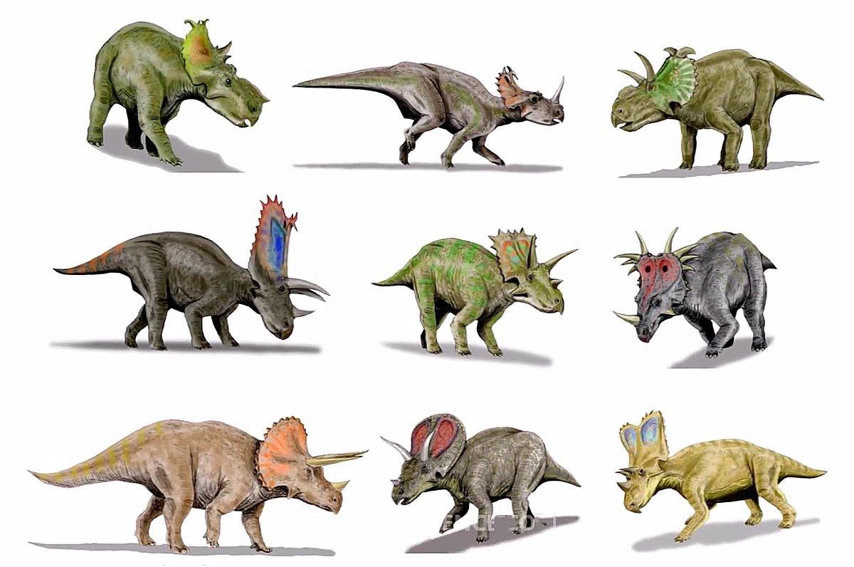 Цератопсы виды, виды цератопсов