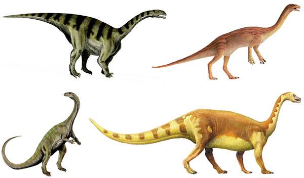 Прозавроподы, Прозауроподы