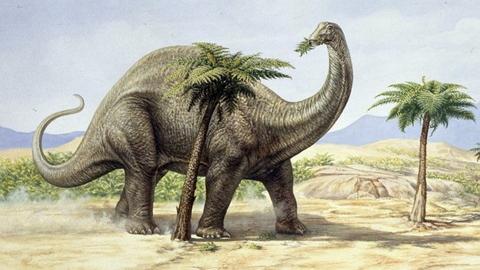 Сколько в среднем весил бронтозавр
