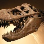 Черепа динозавров фото