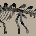 Скелет стегозавра