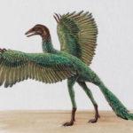 Ископаемое животное археоптерикс имело признаки птицы и пресмыкающегося, археоптерикс признаки птиц и пресмыкающихся таблица