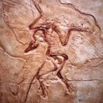 На рисунке изображен отпечаток археоптерикса
