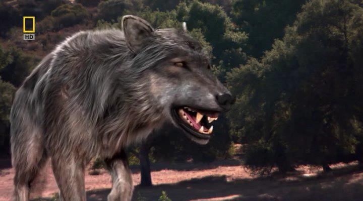 Ужасный волк